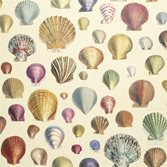 Designers Guild Captain Thomas Browns Shells - Sepia