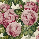 Designers Guild The Rose - Tuberose